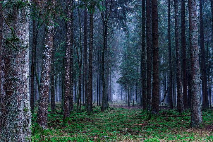 bosc, paisatge, tardor, arbres, Alemanya, natura, estat d'ànim