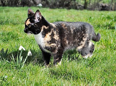 γατάκι, γάτα, κατοικίδια γάτα, νεαρή γάτα