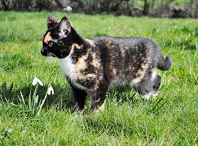 коте, котка, домашна котка, млад котка