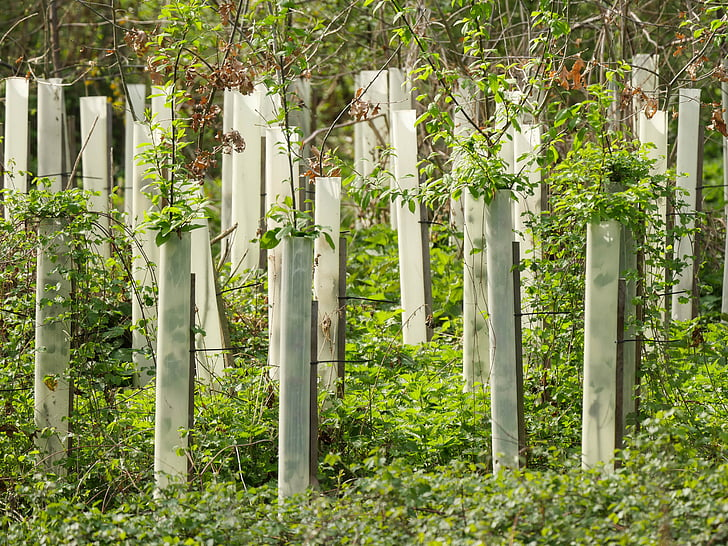arbres, l'élevage, pépinière, se développer, forestier, protection, Forest
