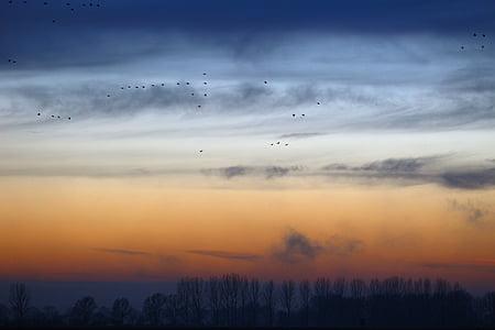 Дикие гуси, вечернее небо, Природа, поле, Гуси, перелетные птицы, пейзаж