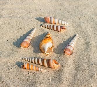 snäckskal, Sand, stranden, marina djur, djur, molluscum, sommar