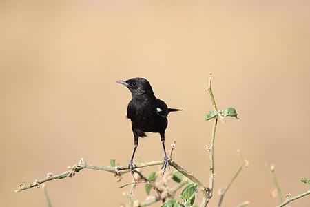 птица, животните, птици, Африка, сафари, диви, природата
