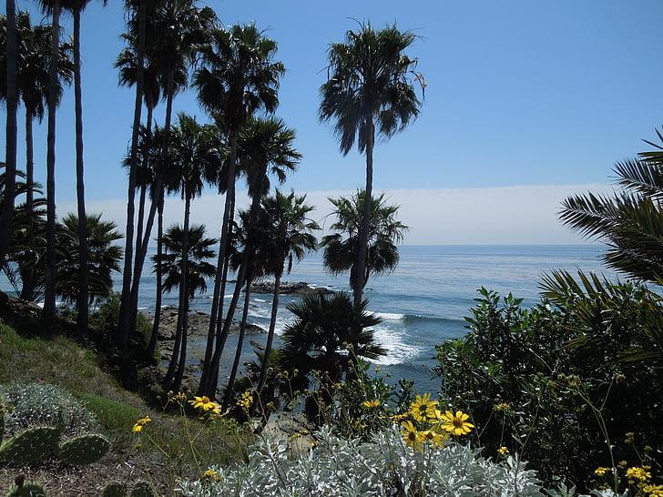 Palm, Palm puud, lehed, Sea, Ocean, vee, Palms