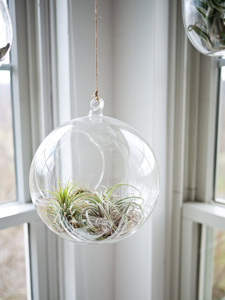 apdaila, Dekoratyviniai, dekoratyvinių augalų, augalų, balta