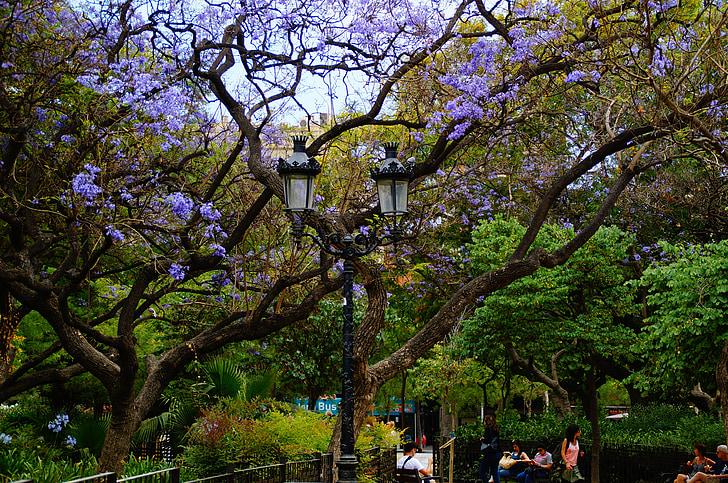 tree, garden, park, green, leaves, fairytale