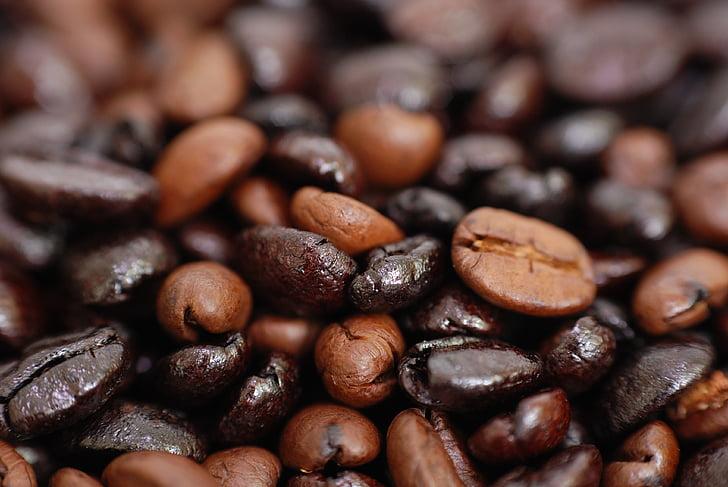 kaffe, aroma, lugten af, koffein, frisk, korn, Afrika