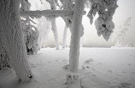 snow, winter, larch, landscape, tree, nature