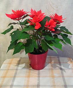 Blumen, Zimmerpflanzen, Bloom, Pflanzen in Töpfen, Indoor-Anlage