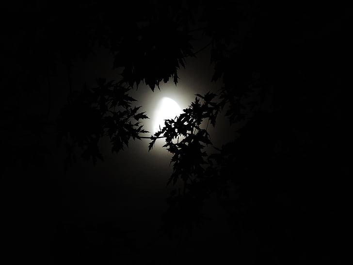 лунна светлина чрез дървета, лунна светлина, Хелоуин, сезон, призрачен, тъмнината, през нощта