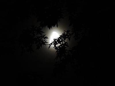 kuuvalgel läbi puud, Moonlight, Halloween, hooaja, õudne, pimedus, öö