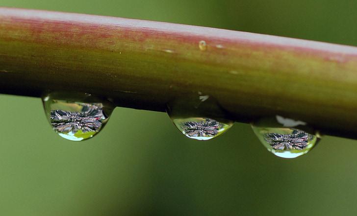 drypp, regn, vann, våte