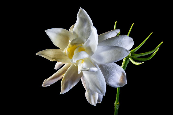 Wild flower, Blossom, Bloom, wit
