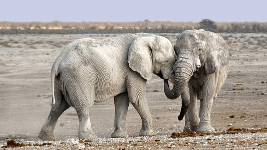 elefant, Àfrica, Namíbia, natura, sec, Heiss, Parc Nacional