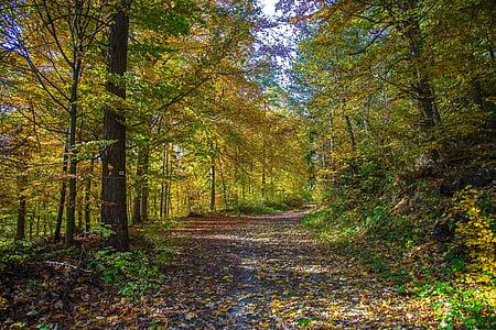 bosc, bosc caducifoli, tardor, fulles, bosc tardor, arbres