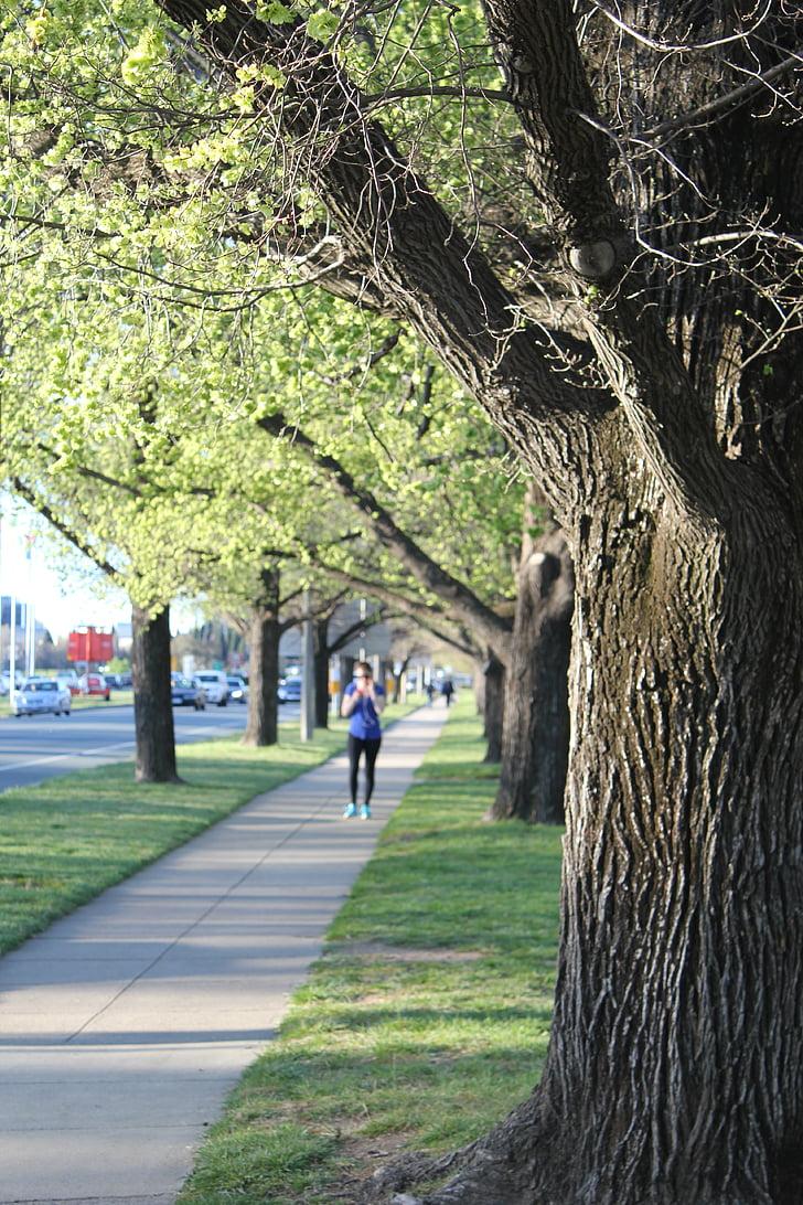 skriešanas, koks, gājēju ceļš, zaļa
