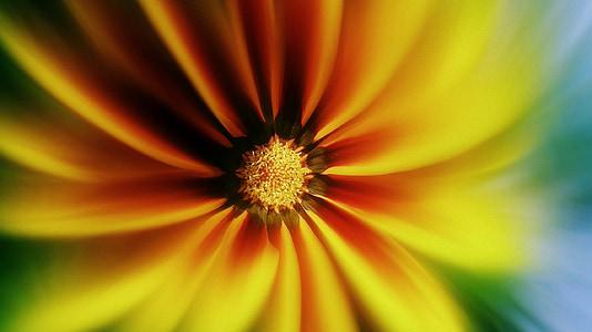 päevalill, taust, lill, tapeet, kollane, looduslik, loodus