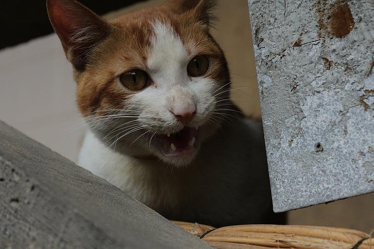 46++ Hewan mamalia kucing terupdate