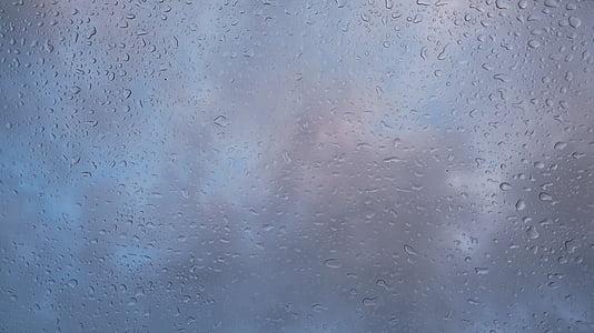 rain, after the rain, a drop, drops of rain, drip, nature, after