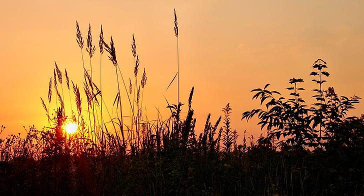 Alba, herba, estat d'ànim, cel, natura, morgenstimmung, matí