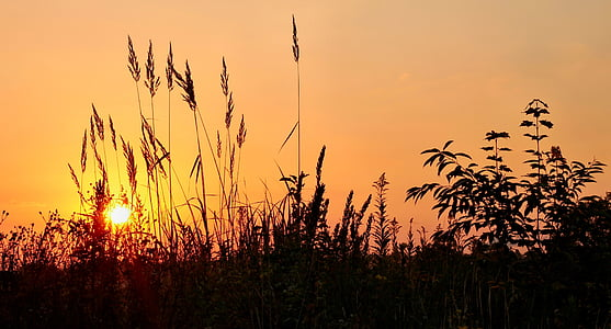 sunrise, grass, mood, sky, nature, morgenstimmung, morning