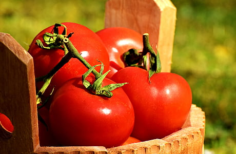 rajčata, zelenina, plechovka, zralé, červená, zdravé, Příroda