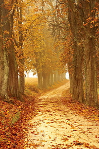 Jesienny nastrój, od, lasu, mgła, jesień, pozostawia, Natura