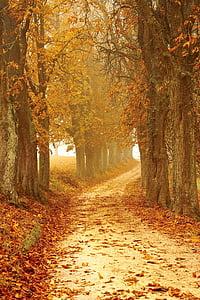 humeur automne, suite, Forest, brouillard, automne, feuilles, nature