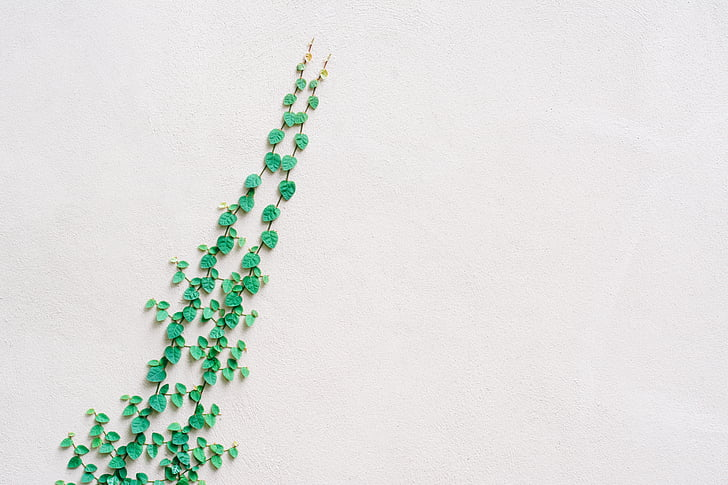 verd, vinyes, blanc, paret, bé, il·luminat, àrea