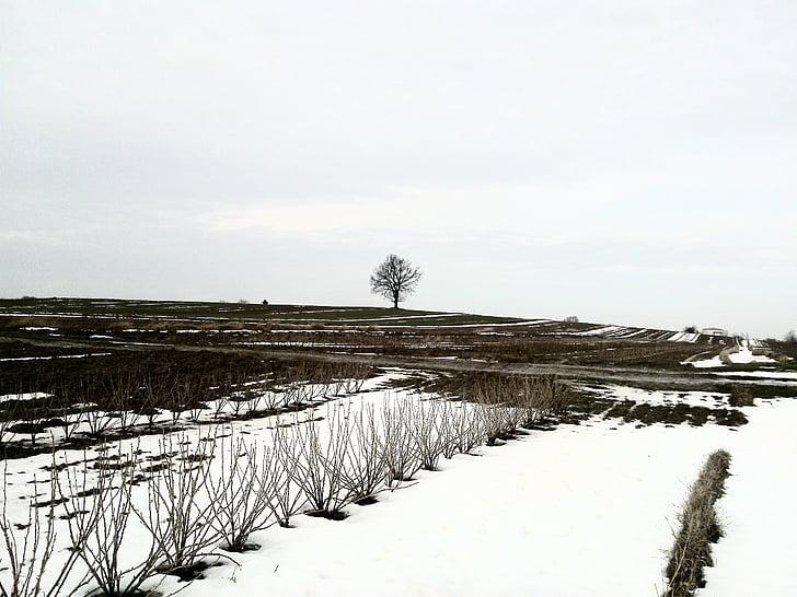 winter, field, snow, nature, tree, landscape, view