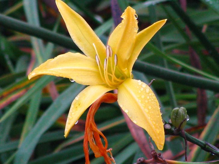 ใบ, ใบไม้, ดอกไม้, ดอกไม้, ธรรมชาติ, น้ำค้าง, ฝน