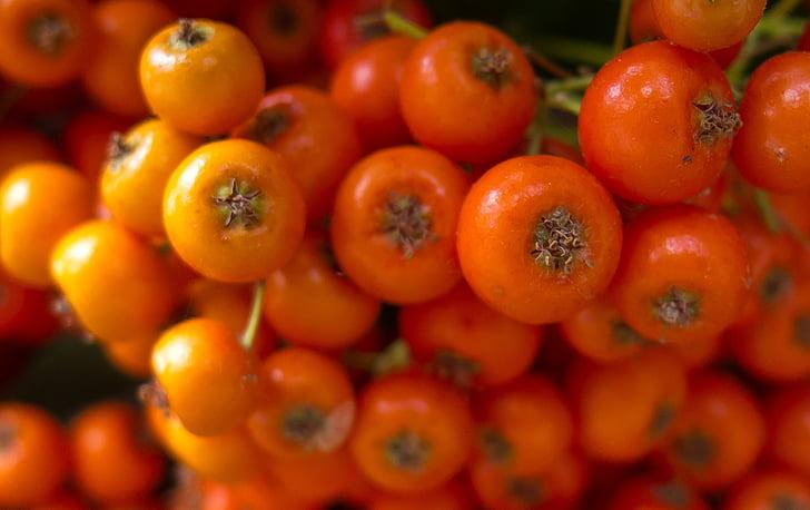 vostè ballas, fruita, taronja, arbust, fruits del bosc, planta, natura