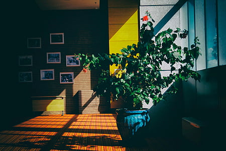 architecture, building, indoor, interior, plants, house, living room
