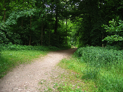 away, forest, forest path, glade, direction, bushes, trees