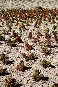 plant, desert, desert plant