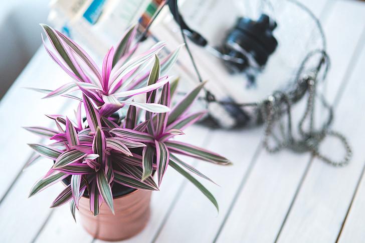 plant, kamerplanten, Indoor, huis, decor, decoratie, decoratieve