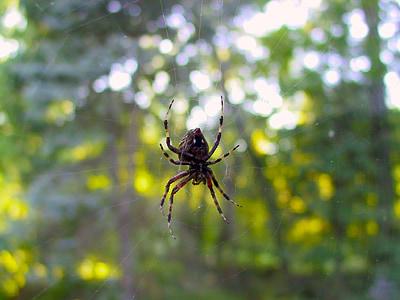 spider, window, web, spiderweb, underside, arachnid, arachnophobia