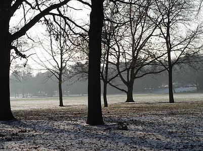 trees, winter, mood, cold, wintry, snow magic, winter dream