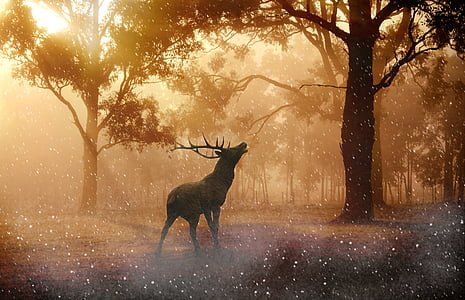 hirsch, wild, antler, nature, forest, meadow, lighting