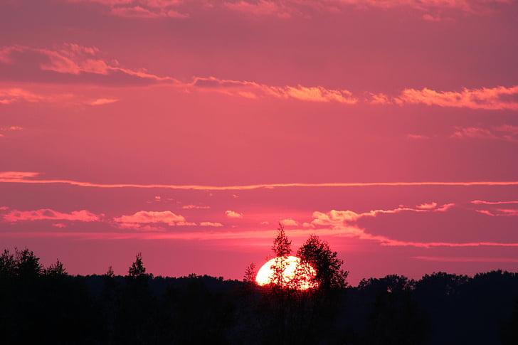 pôr do sol-de-rosa, noite, natureza, céu, pôr do sol, árvore, silhueta