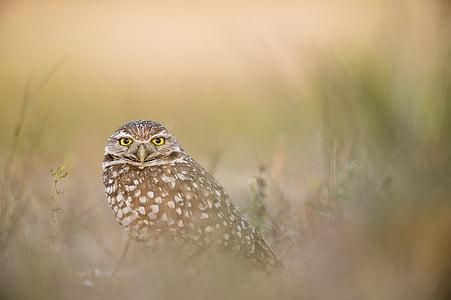 životinja, ptičje, ptica, perje, trava, sova, perje