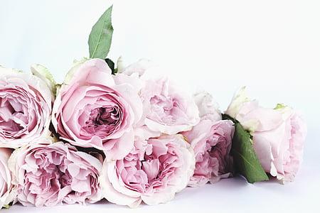 flor, flor, RAM, close-up, color, color, decoració