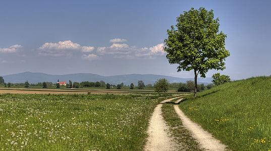 pot do jezu, narave, Bavarski gozd, pohodništvo, krajine