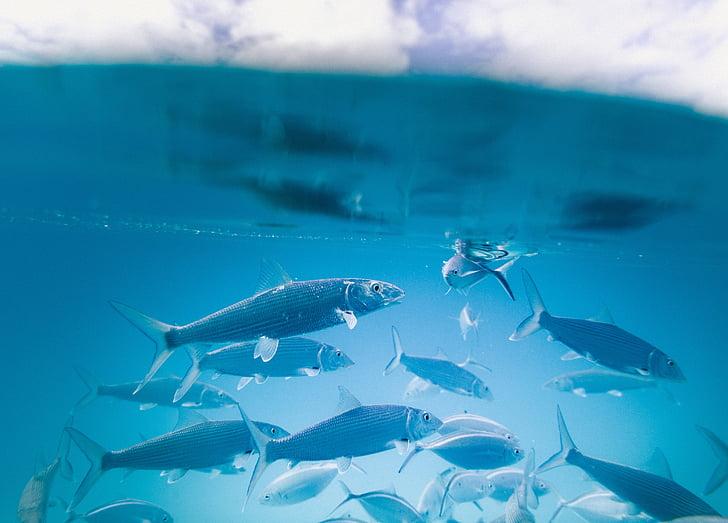 воды, Аквариум, Рыба, Подводный, Голубой, плавник, без людей