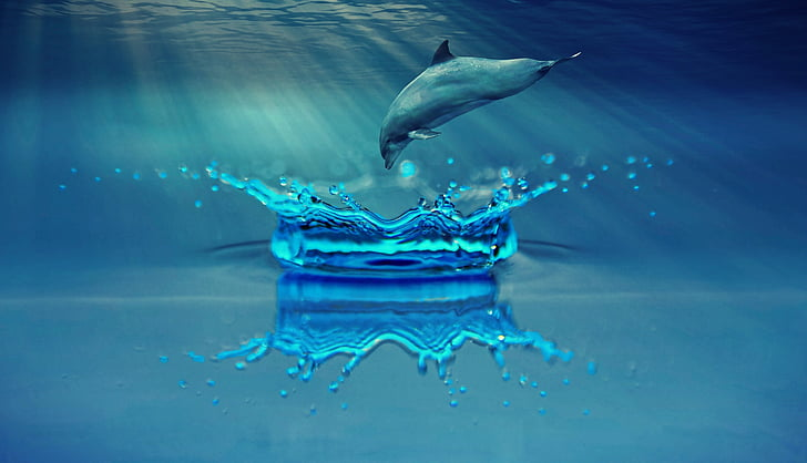 делфините, животните, морски бозайници, вода, море, океан, плуване