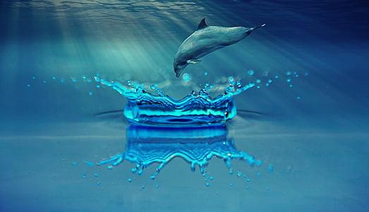 ปลาโลมา, สัตว์, เลี้ยงลูกด้วยนมทางทะเล, น้ำ, ทะเล, โอเชี่ยน, ว่ายน้ำ