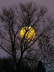 bulan, bulan purnama, imigran, malam, senja, Moonlight, pohon