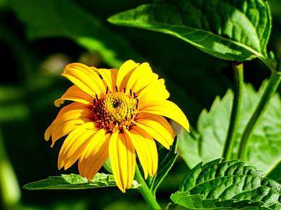 lill, suvel, kollane, Suvine lill, kollane lill, loodus, suvel taimed