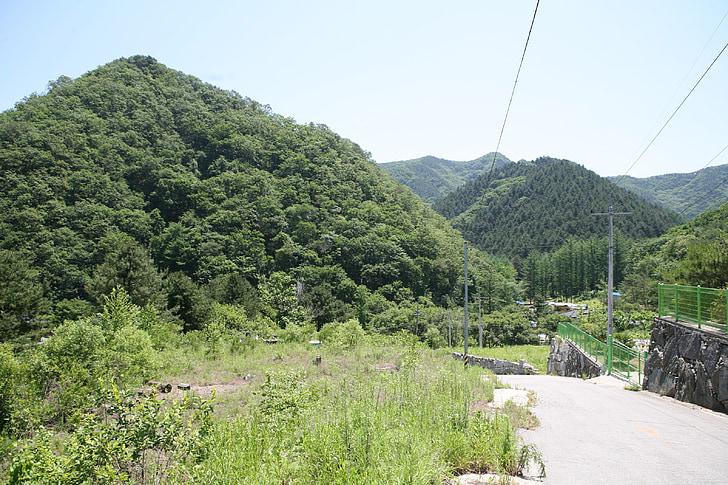 Thiên nhiên, trong rừng, điều dưỡng