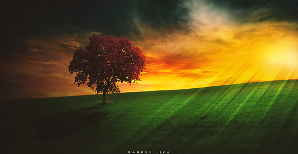paisaje, sol, Horizon, panorama, Brasil, por la tarde, nube